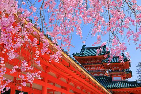 Sakura26