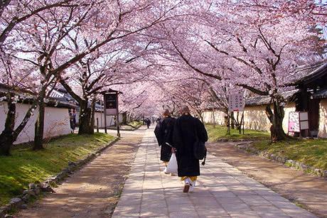 「建仁寺 桜」の画像検索結果
